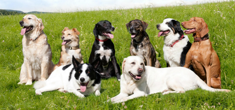 What are the breeds of dogs